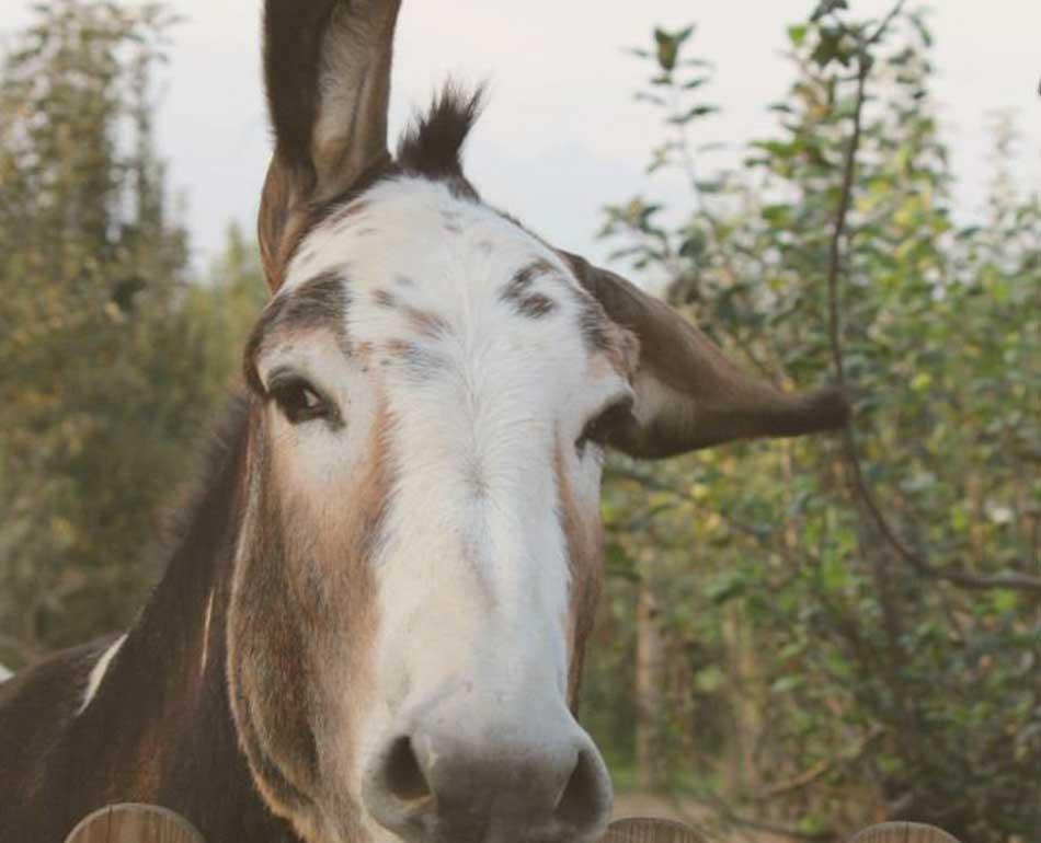 Il Giardino di Mule