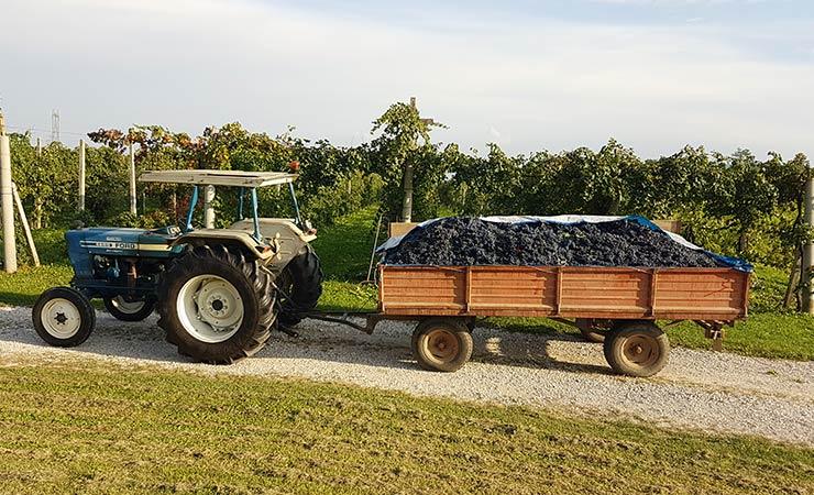 Società agricola Bio-solar
